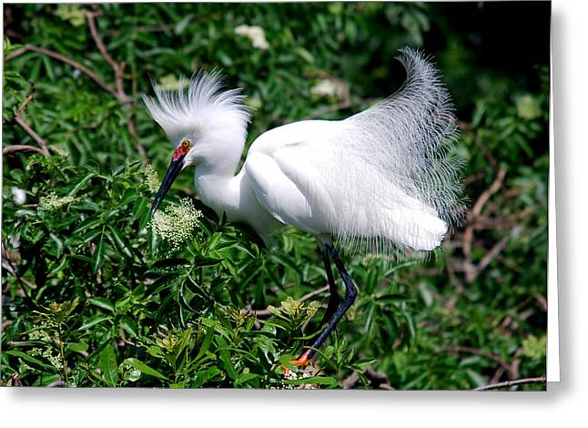 Photos Of Birds Greeting Cards - How Pretty Am I Greeting Card by Skip Willits
