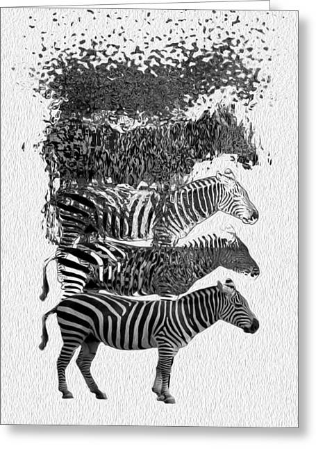 Zebra Canvas Art Prints Greeting Cards - How To Make A Zebra Greeting Card by Jack Zulli