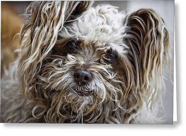 Cairn Terrier Greeting Cards - How Ya Doing Greeting Card by Saija  Lehtonen