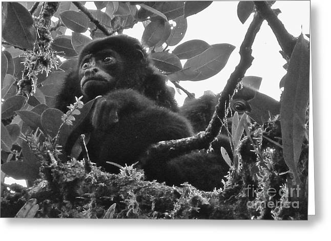 Costa Pastels Greeting Cards - Howler Monkeys Greeting Card by Tracey Levine
