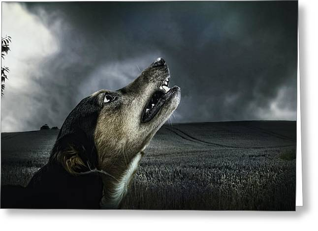 Growling Photographs Greeting Cards - Howling at the Moon Greeting Card by Mountain Dreams