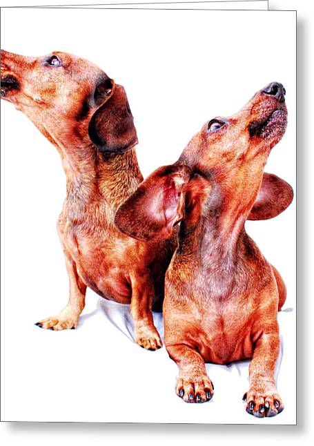 Hounddog Greeting Cards - Howling Hounds Greeting Card by Johnny Ortez-Tibbels