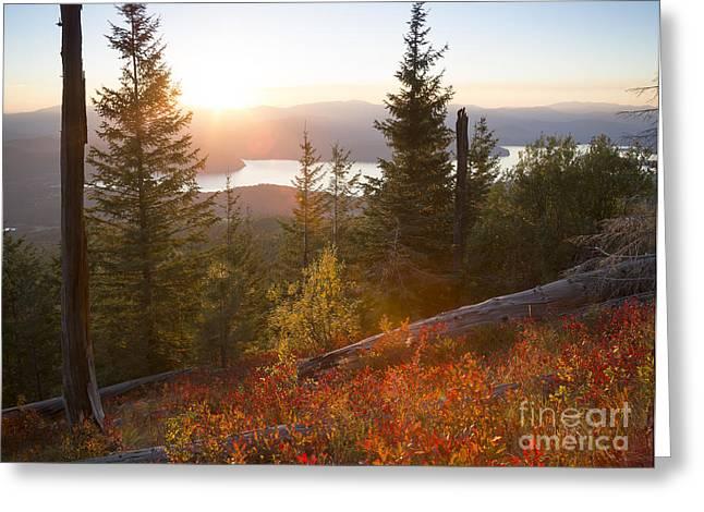 Huckleberry Blaze Greeting Card by Idaho Scenic Images Linda Lantzy