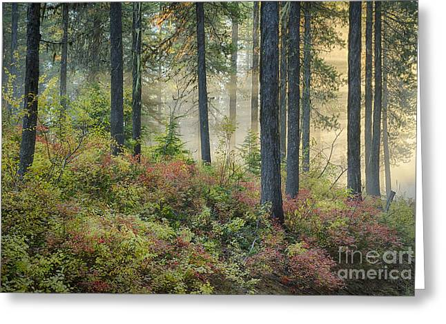 Huckleberry Greeting Cards - Huckleberry Patch Greeting Card by Idaho Scenic Images Linda Lantzy