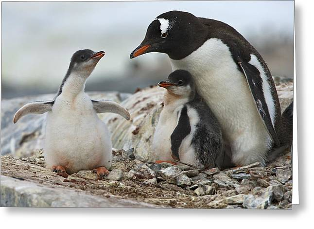Family Love Greeting Cards - Hug Me... Greeting Card by Nina Stavlund