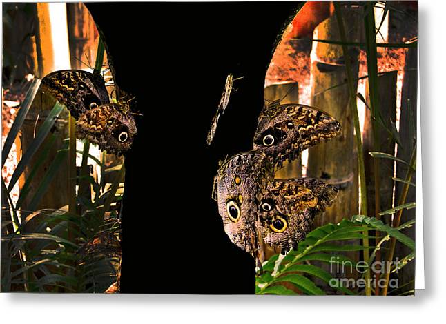Huge Eyes Greeting Cards - Huge Butterflies In Mindo Greeting Card by Al Bourassa