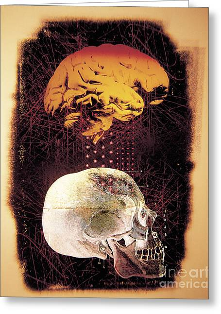 Conscious Greeting Cards - Human Brain And Skull Greeting Card by Dennis D. Potokar