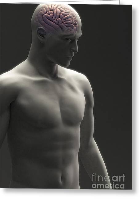 Central Nervous System Greeting Cards - Human Brain Male Greeting Card by Science Picture Co