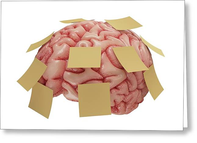 Human Brain With Sticky Notes Greeting Card by Ktsdesign