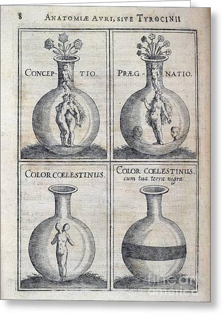 Human Biology Greeting Cards - Human Development, 17th Century Artwork Greeting Card by British Library