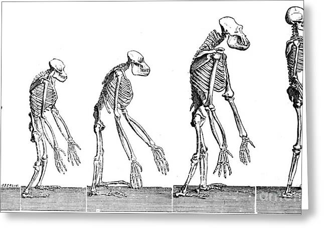 Timeline Greeting Cards - Human Evolution 1883 Greeting Card by British Library