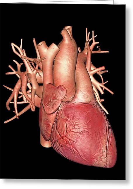 Human Heart Greeting Card by Alfred Pasieka