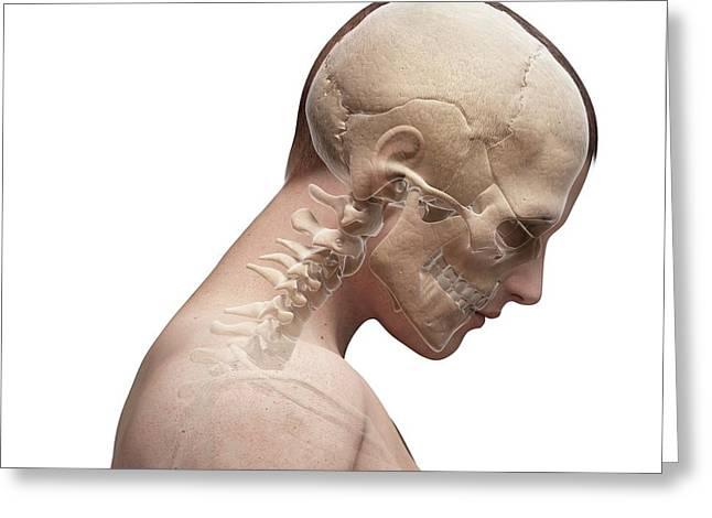 Human Neck Bending Forwards Greeting Card by Sebastian Kaulitzki