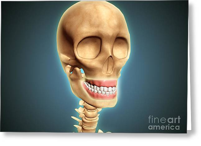 Human Skeleton Showing Teeth And Gums Greeting Card by Stocktrek Images