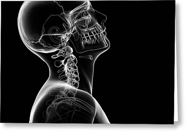 Human Skull And Neck Bones Greeting Card by Sebastian Kaulitzki