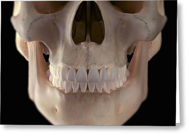 Aperture Greeting Cards - Human Skull Greeting Card by Science Picture Co