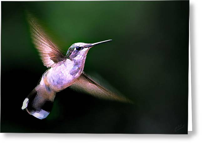 White Digital Greeting Cards - Hummer Ballet 1 Greeting Card by Bill Caldwell -        ABeautifulSky Photography