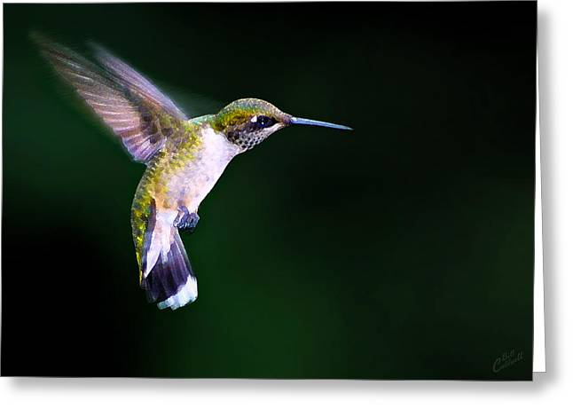 Artistic Photography Greeting Cards - Hummer Ballet 2 Greeting Card by Bill Caldwell -        ABeautifulSky Photography