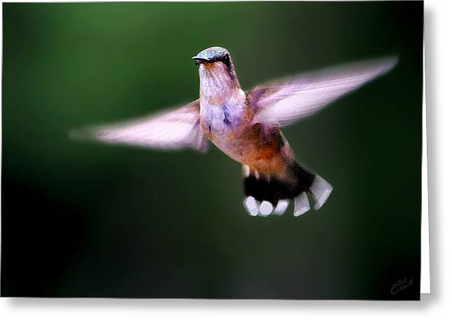 White Digital Greeting Cards - Hummer Ballet 3 Greeting Card by Bill Caldwell -        ABeautifulSky Photography
