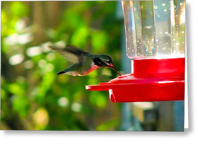 Stein Greeting Cards - Hummer Greeting Card by Curtis Stein
