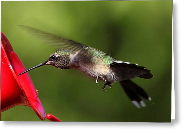 Bird-feeder Greeting Cards - Look Hummer Eyelashes Greeting Card by Reid Callaway