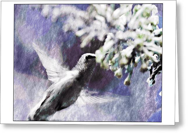 Hummer Feeding Greeting Card by Susan Leggett