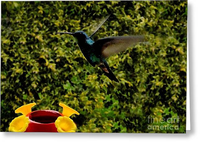 Hovering Greeting Cards - Hummer In Watercolor Greeting Card by Al Bourassa