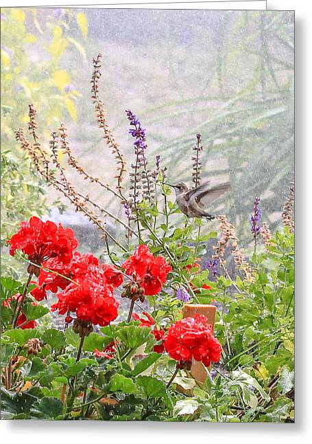Water Garden Greeting Cards - Hummer Shower Greeting Card by Aaron Aldrich