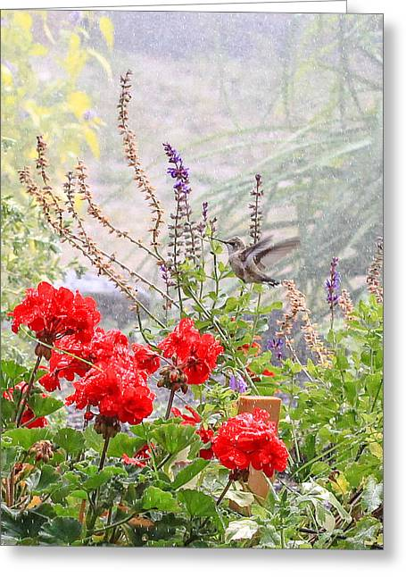 Hummer Shower Greeting Card by Aaron Aldrich