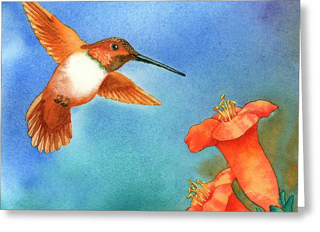 Rufus Greeting Cards - Hummer Greeting Card by Tracy L Teeter