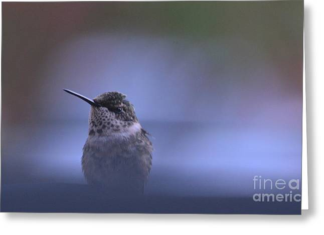 Bluebird Posters Greeting Cards - Humming Bird at Rest Greeting Card by Barbara Dalton