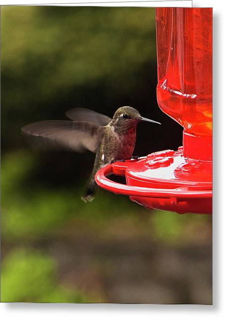 Ron Roberts Photography Framed Prints Greeting Cards - Humming Bird Landing Greeting Card by Ron Roberts