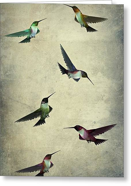 Humming Bird Textured Art  Greeting Card by Movie Poster Prints