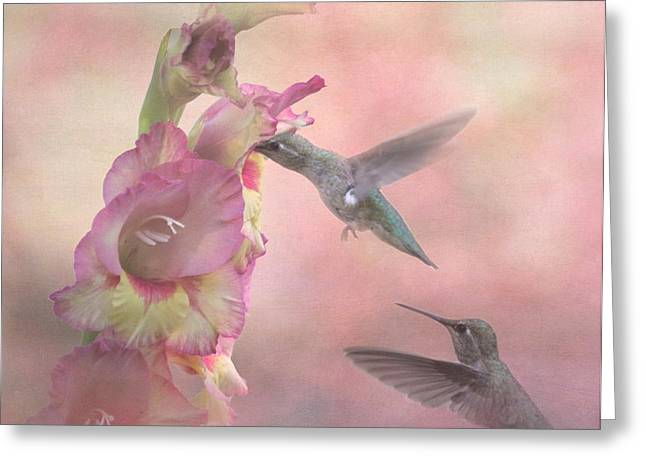 Birds With Flowers Greeting Cards - Humming Gladiola Greeting Card by Angie Vogel
