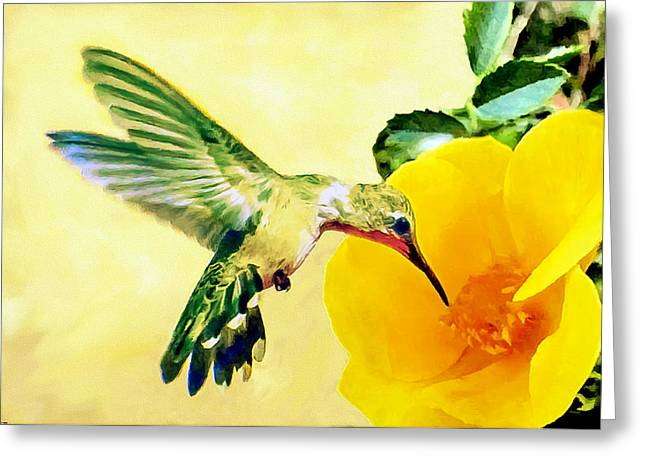 South For The Winter Greeting Cards - Hummingbird and California Poppy Greeting Card by  Bob and Nadine Johnston