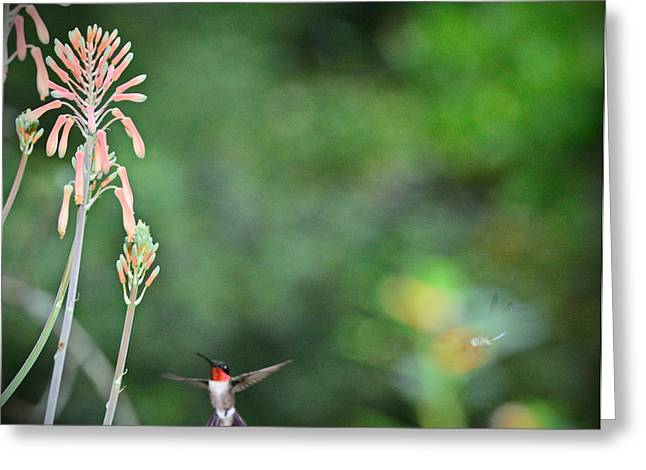 Hummingbirds Greeting Cards - Hummingbird and Dragonfly Imagine Greeting Card by Wayne Nielsen