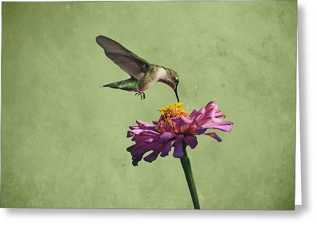 Ruby Throated Hummingbird Art Greeting Cards - Hummingbird and Zinnia Greeting Card by Sandy Keeton