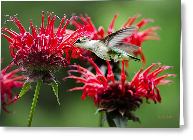 Flying Animal Greeting Cards - Hummingbird Angel in Heaven Greeting Card by Christina Rollo