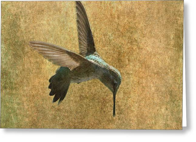 Hovering Greeting Cards - Hummingbird Greeting Card by Angie Vogel