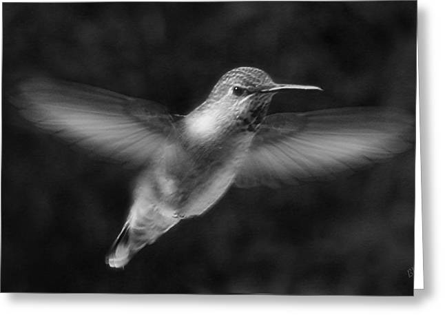 Hovering Greeting Cards - Hummingbird Greeting Card by Ben and Raisa Gertsberg