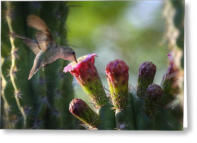 Hummingbird Breakfast Southwest Style  Greeting Card by Saija  Lehtonen