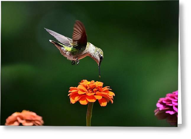 Hovering Greeting Cards - Hummingbird Bullseye Greeting Card by Christina Rollo