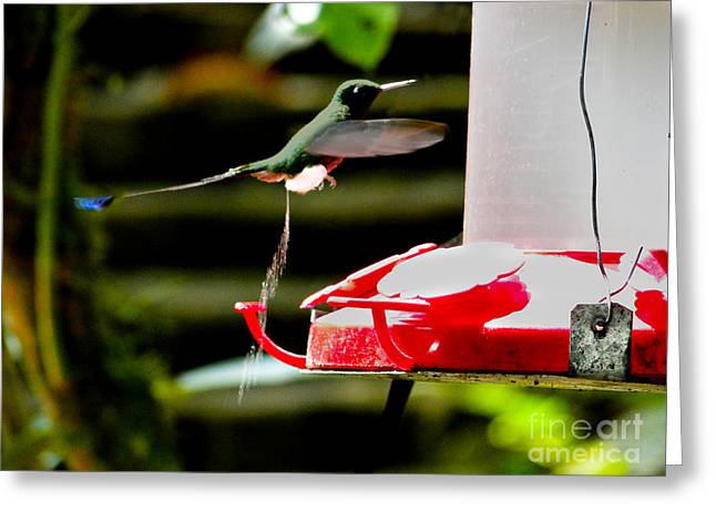 Racquet Photographs Greeting Cards - Hummingbird Business Greeting Card by Al Bourassa