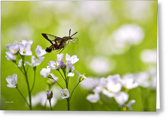 Hovering Greeting Cards - Hummingbird Clearwing Moth Flying Away Greeting Card by Christina Rollo