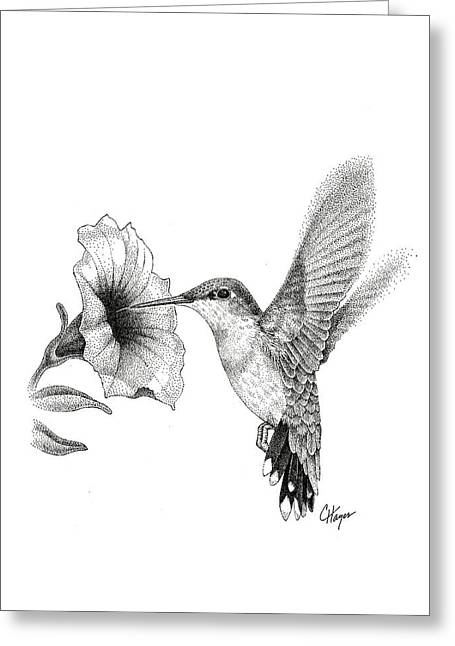 Pen And Ink Realism Greeting Cards - Hummingbird Greeting Card by Colin Hayes