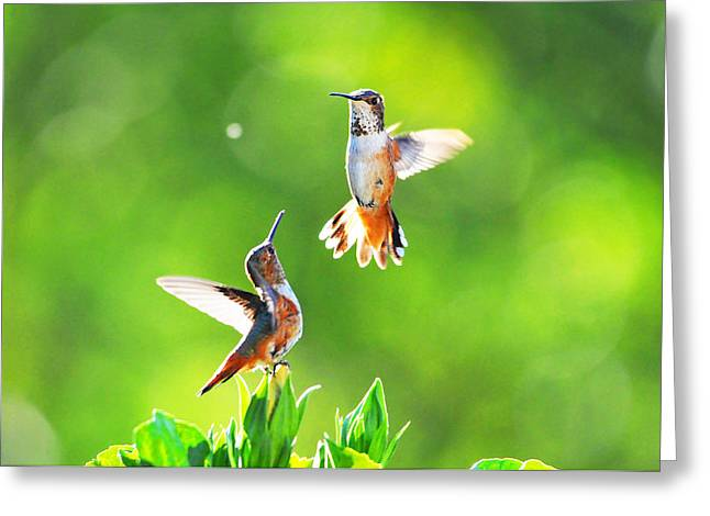 Ventura California Greeting Cards - Hummingbird Dance  Greeting Card by Lynn Bauer