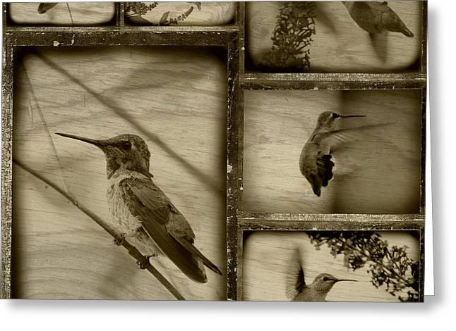 Carol Groenen Greeting Cards - Hummingbird Family Portraits Greeting Card by Carol Groenen