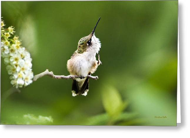 Ruby Throated Hummingbird Greeting Cards - Hummingbird Flexibility Greeting Card by Christina Rollo
