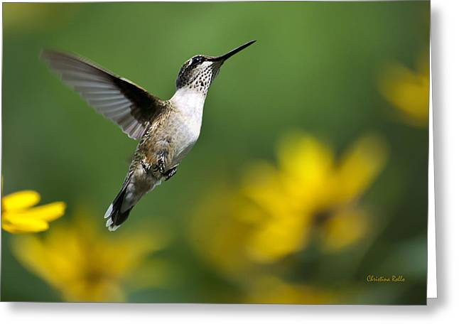 Hovering Greeting Cards - Hummingbird Flight Of Fancy Greeting Card by Christina Rollo