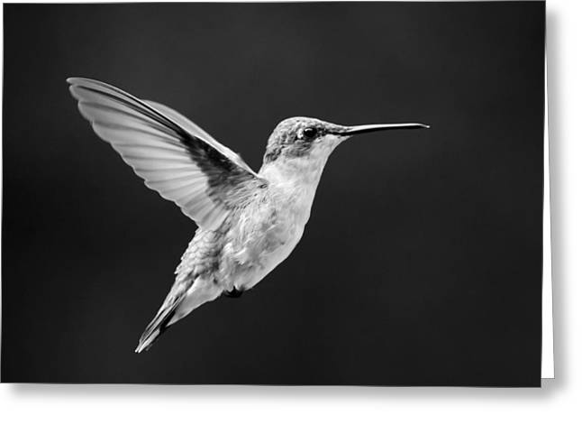 Flying Animal Greeting Cards - Hummingbird Flyby Square Greeting Card by Christina Rollo